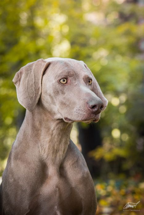 Almost Heaven of DiamWeim