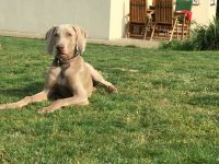 Destiny´s Child of Diam Weim