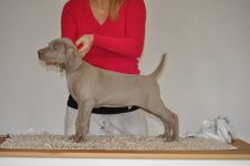 Dio The Magic Boy of Diam Weim