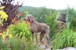 Breathtaking Vesper of Diam Weim